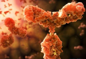 Antibody IgG1