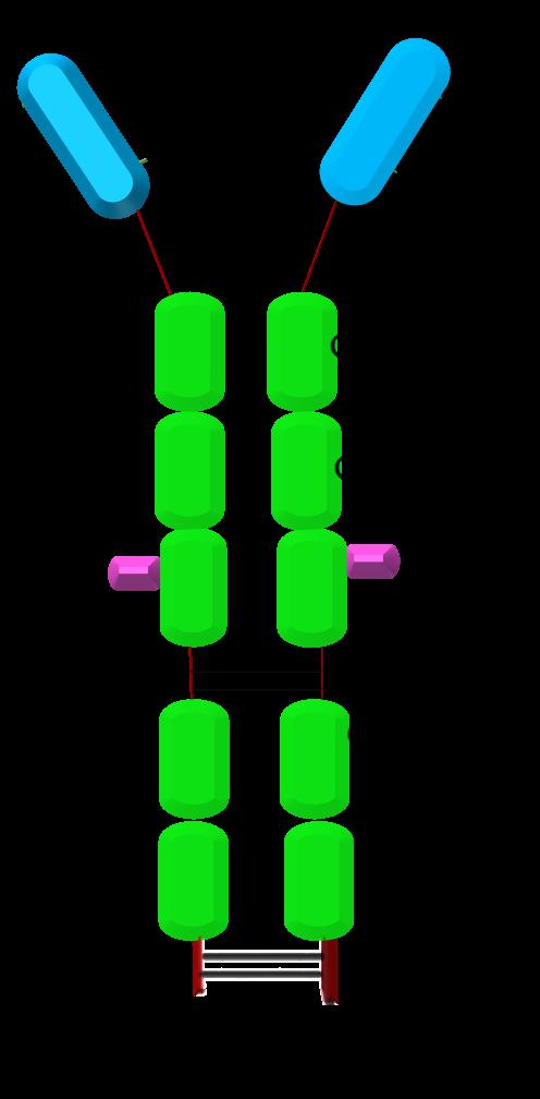shark antibody structure