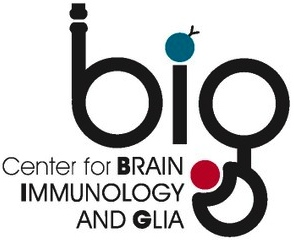 Image of B.I.G logo with wording: Center for Brain Immunology and Glia.