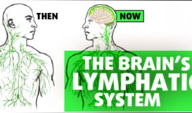 Smart Drug Smarts podcast interview highlights lymphatic system discovery