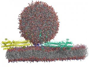 computational Biology Image-