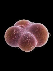 hi res fat cell