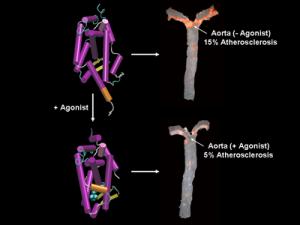 Aorta Antagonist