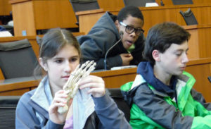 students in classroom looking at a skeletal model of a foot