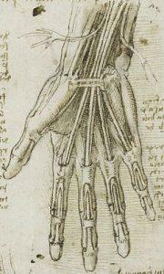 da Vinci - Hand