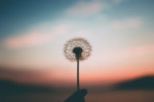 Mindfulness Gratitude