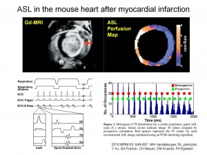 mouse myocardial infarction imaged with an MRI spin label