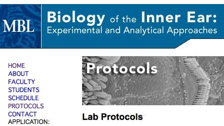 BiolofInnerEarProtocols