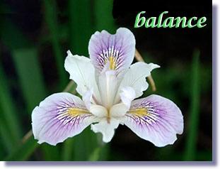 irisbalance11102014