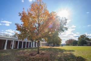 The UVA Lawn in the fall