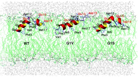 Structures of influenza virus fusion peptides in lipid membranes.