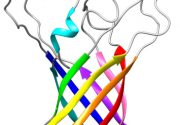 Structure of P. aeruginosa OprG