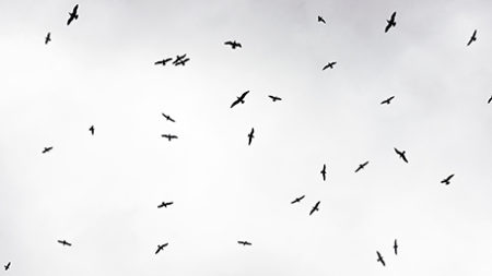 Image of group of flying birds