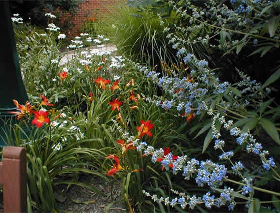 mixed-flowers in garden